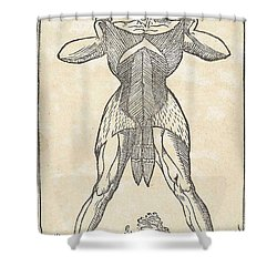 Historical Anatomical Illustration Shower Curtain by Science Source