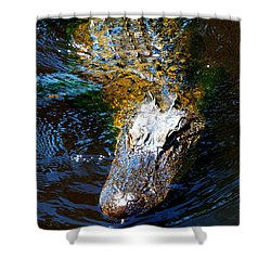 Alligator In Mississippi River Shower Curtain by Paul Ge