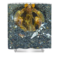 Orange Mantis Shrimp In Its Burrow Shower Curtain by Steve Jones