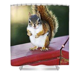 Red Squirrel On Railing Shower Curtain by Elena Elisseeva