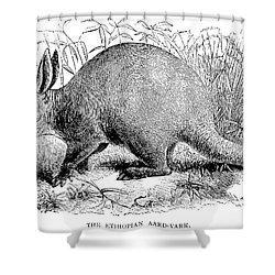 Aardvark Shower Curtain by Granger