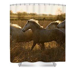 Camargue Horse Equus Caballus Group Shower Curtain by Konrad Wothe