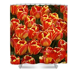 Flaming Tulips Shower Curtain by Michele Burgess