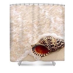 Seashell And Ocean Wave Shower Curtain by Elena Elisseeva