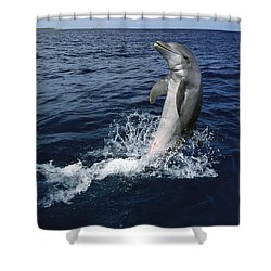 Bottlenose Dolphin Tursiops Truncatus Shower Curtain by Konrad Wothe