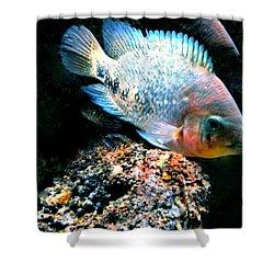Fish Living In Denmark Shower Curtain by Colette V Hera  Guggenheim