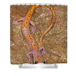 Cave Salamander Shower Curtain by Dante Fenolio