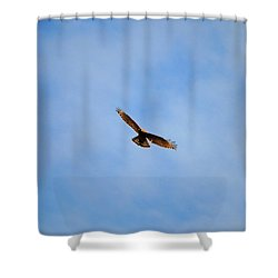 Red Shouldered Hawk In Flight Shower Curtain by Jai Johnson