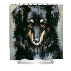 A Black And Tan Collie Shower Curtain by Robert Morley