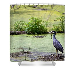 A Blue Bird In A Wetland -yellow-crowned Night Heron  Shower Curtain by Ellie Teramoto