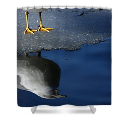 A Gull Reflects Shower Curtain by Karol Livote
