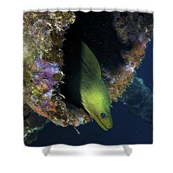 A Large Green Moray Eel Shower Curtain by Terry Moore