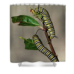 A Pair Of Monarch Caterpillars Shower Curtain by Sabrina L Ryan