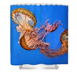 A Trio Of Jellyfish Shower Curtain by Kristin Elmquist