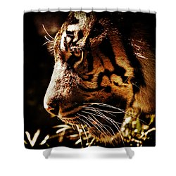 Absolute Focus Shower Curtain by Andrew Paranavitana