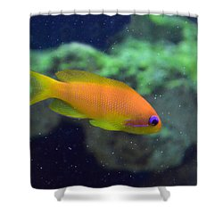 African Anthias Shower Curtain by Sandi OReilly
