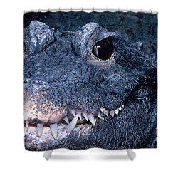 African Dwarf Crocodile Shower Curtain by Dante Fenolio