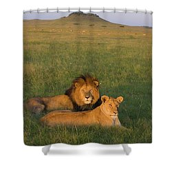 African Lion Panthera Leo Male Shower Curtain by Suzi Eszterhas
