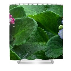 African Violets Intertwined II Shower Curtain by Nancy Mueller