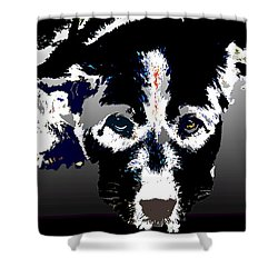 Akita Chow Shower Curtain by One Rude Dawg Orcutt