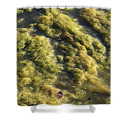 Algae Bloom In A Pond Shower Curtain by Photo Researchers, Inc.