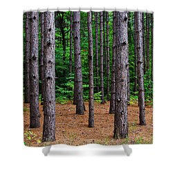 Alone Among The Pines Shower Curtain by Rachel Cohen