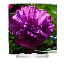 Althea II Shower Curtain by Patricia Griffin Brett