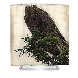 American Bald Eagle In Tree Shower Curtain by Dan Friend