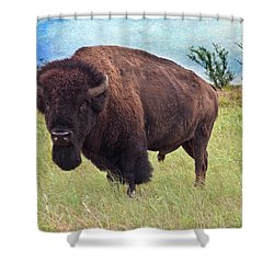 American Bison Shower Curtain by Tamyra Ayles