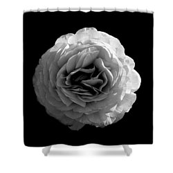 An English Rose Shower Curtain by Sumit Mehndiratta