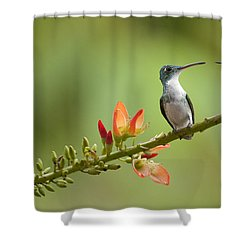 Andean Emerald Amazilia Franciae Shower Curtain by Murray Cooper