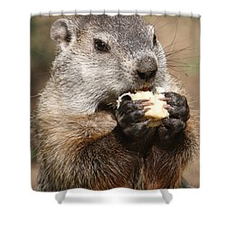 Animal - Woodchuck - Eating Shower Curtain by Paul Ward