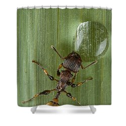 Ant Drinking From Water Droplet Papua Shower Curtain by Piotr Naskrecki