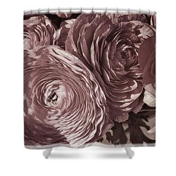 Antique Pink Ranunculus Shower Curtain by Joan Carroll