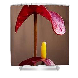 Anturium Shower Curtain by Stelios Kleanthous