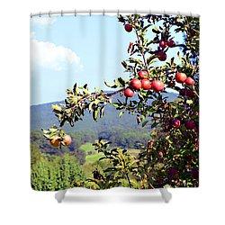 Apples On A Tree Shower Curtain by Susan Leggett