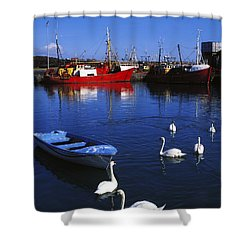 Ardglass, Co Down, Ireland Swans Near Shower Curtain by The Irish Image Collection