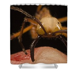 Army Ant Eciton Biting Finger Shower Curtain by Mark Moffett