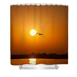 As The Gull Glides Shower Curtain by Karol Livote