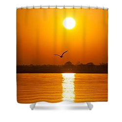As The Seagull Heads Home Shower Curtain by Karol Livote
