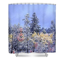 Aspens In Fall With Snow, Near 100 Mile Shower Curtain by David Nunuk