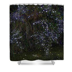 Aster Days Shower Curtain by Ron Jones