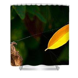 Atres 8 Shower Curtain by Karol Livote