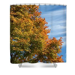 Autumn Anticipation Shower Curtain by Carol Groenen