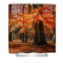 autumn skirt III Shower Curtain by Hannes Cmarits