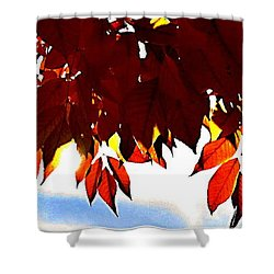 Autumn Sun Glory Shower Curtain by Danielle  Parent