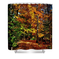 Autumn Walk Shower Curtain by David Patterson