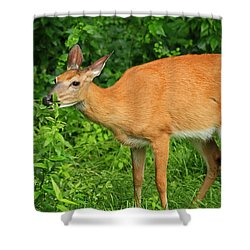 Backyard Dining Shower Curtain by Karol Livote