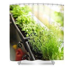Balcony Herb Garden Shower Curtain by Elena Elisseeva