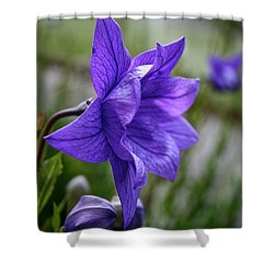 Balloon Flower Profile Shower Curtain by Susan Herber